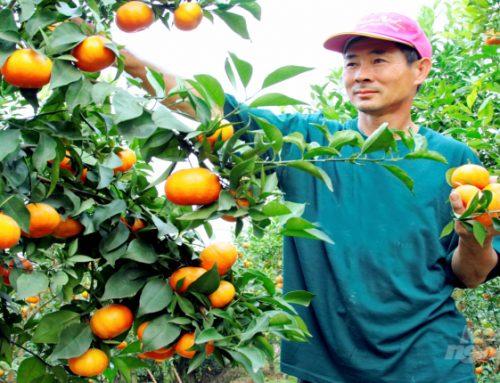 Minh bạch hóa nông sản bằng QR Code