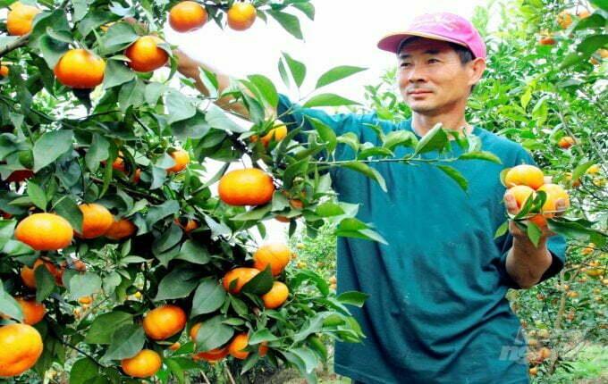 Sản phẩm nông nghiệp sử dụng qr minh bạch thông tin của checkvn